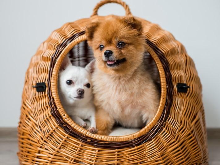 【獣医師執筆】外飼い?それとも室内飼い?犬が生活をする「最適な場所」について