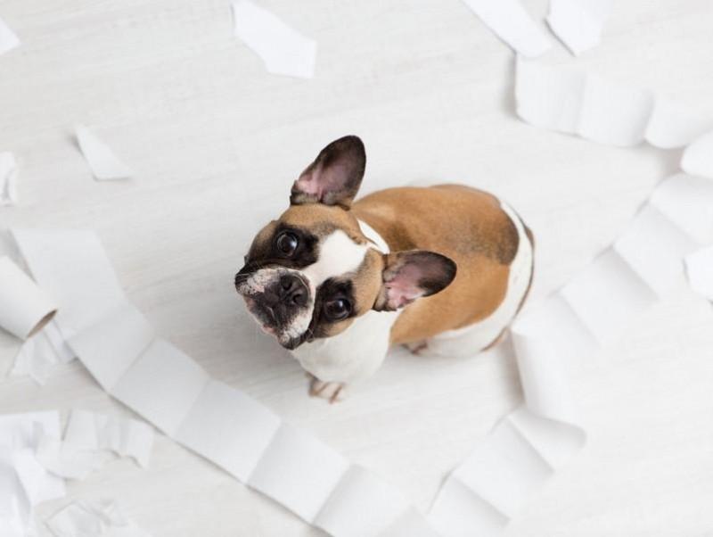 犬 の オシ っ こ 撃退 法