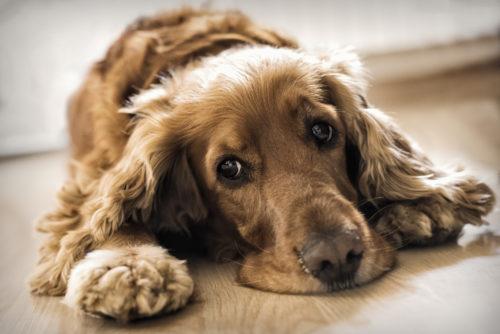 舐める 犬 おしっこ 犬が体を舐める時に疑う病気