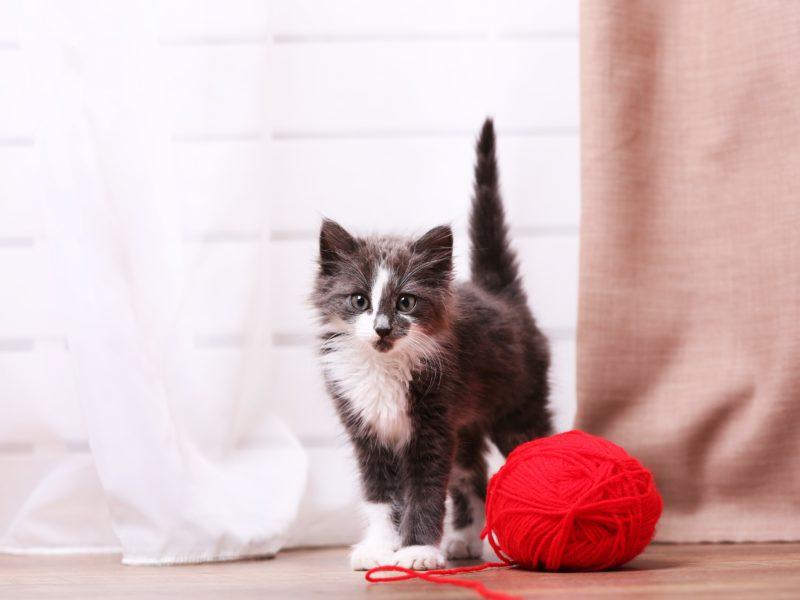 うれしいの?怒ってるの?「猫のしっぽ」からわかる猫の気持ち