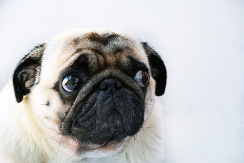 匂い 犬 を 嗅ぐ おしり の